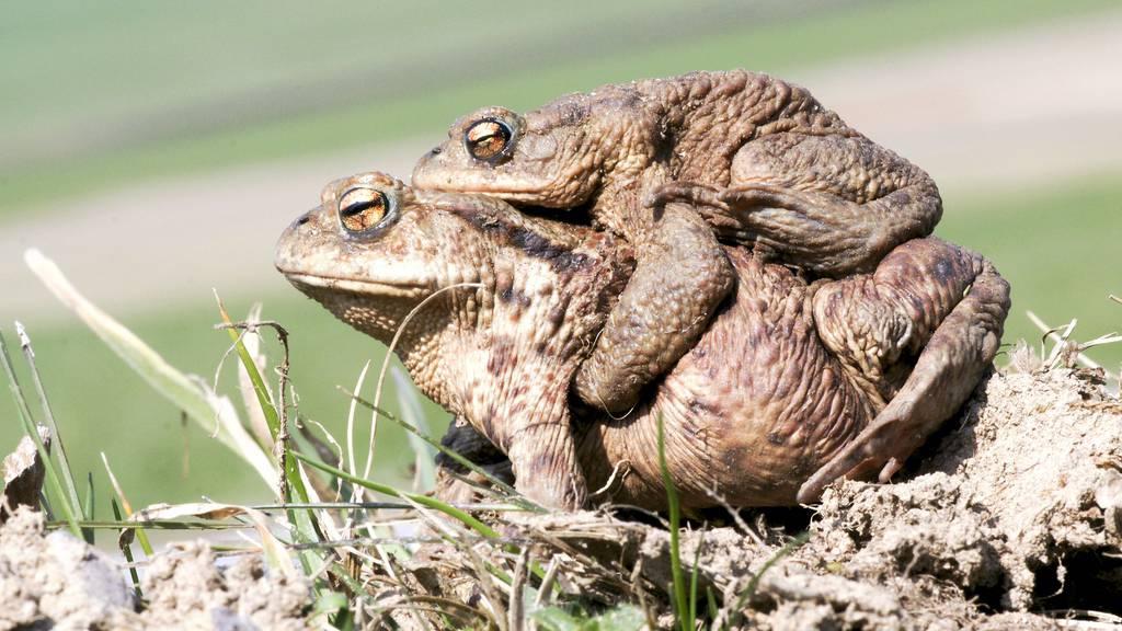 In Luzern sind die Amphibien los