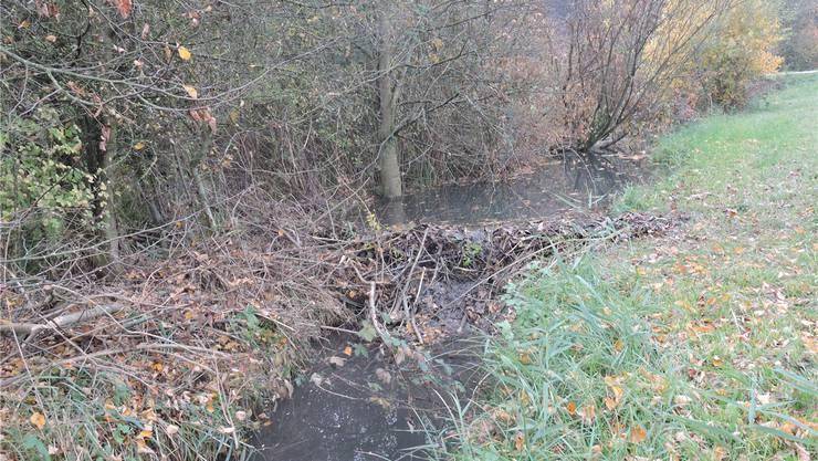 Der Damm und seine Folgen: Hier errichtete der Biber seinen Bau.