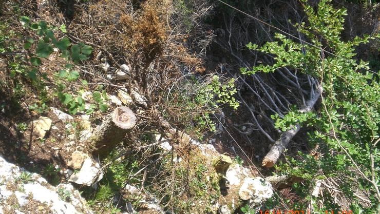 Unterhalb der Rampe wurden illegal Bäume abgeholzt. Foto: zvg