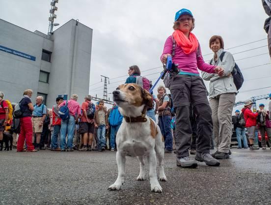 Nicht nur 230 Wanderfreunde, auch Hunde waren heute wieder dabei