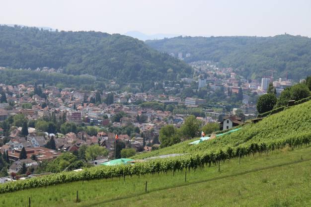 In Wettingen AG wird seit rund 800 Jahren Wein angebaut. (Bild: Claudia Laube)
