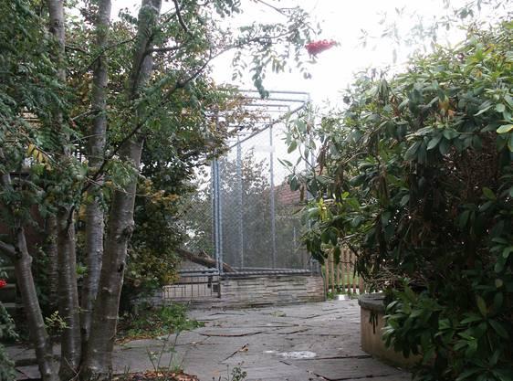 Leopard Ravi lebte mit einem Schäferhund in einem 70 Quadratmeter grossen Gehege im Garten – bis im Oktober 2003.