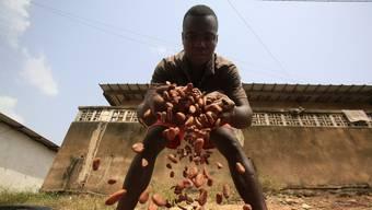 Kinderarbeit ist wegen fallender Kakaopreise wieder vermehrt zum Thema geworden. (Symbolbild)