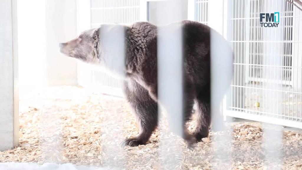 Jambolina hält zum ersten Mal in ihrem Leben Winterruhe
