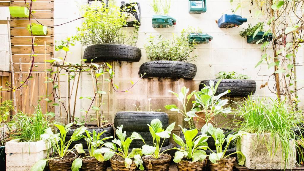 Urban Gardening – Entdecke den Grünen Daumen an dir