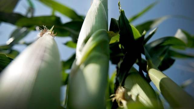 FAO kritisiert Einsatz von hochgiftigen Pestiziden (Archiv)