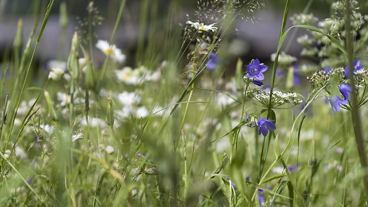 Bunter und grüner: Privatpersonen und Unternehmer können in Winterthur neue Grünflächen sponsern. (Symbolbild)