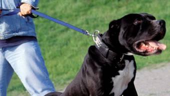 Der Hund biss zu, erwischte aber mehr Stoff als Haut. (Archiv)
