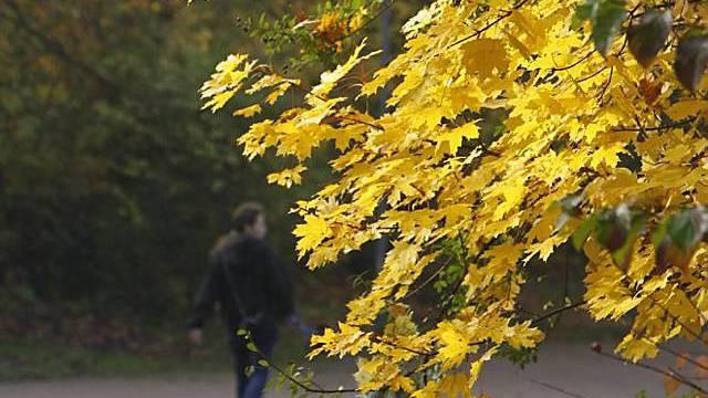 Herrliches Herbstwetter Ende Oktober