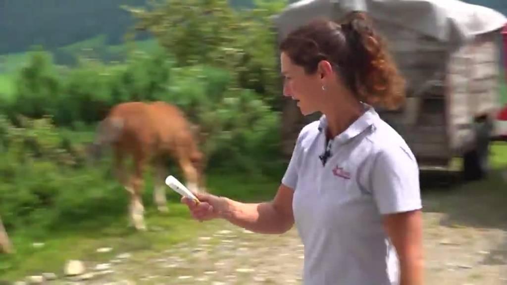 Bergfrauen: Tierärztin