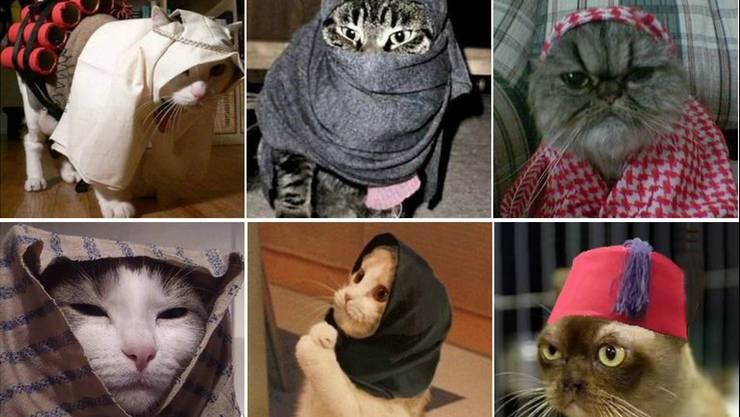 Brüssel reagiert mit Katzenbildern auf die Terrorgefahr.