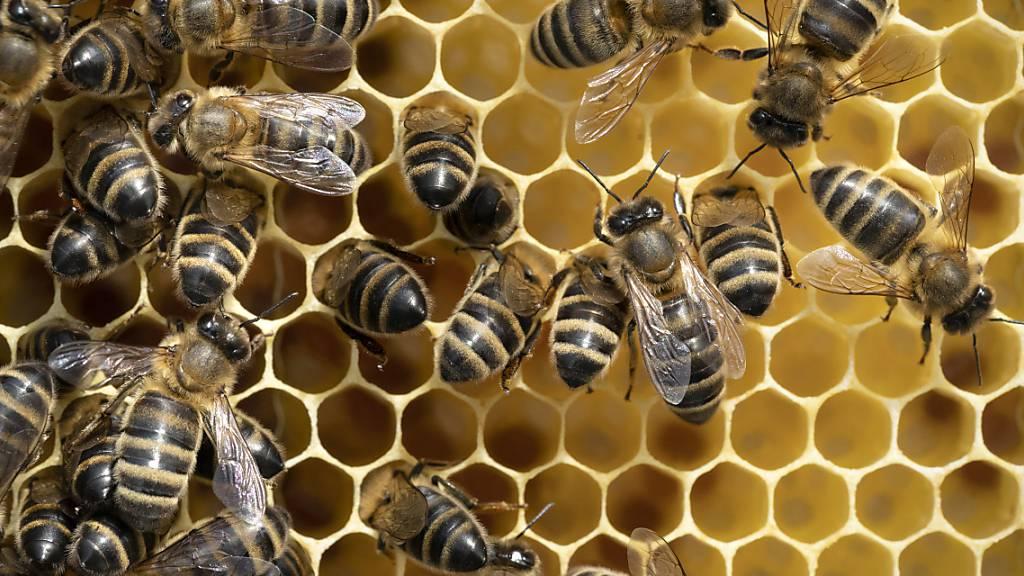 Über ein Siebentel der Bienenvölker überlebten den Winter nicht
