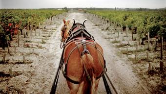 Bordeaux-Weine