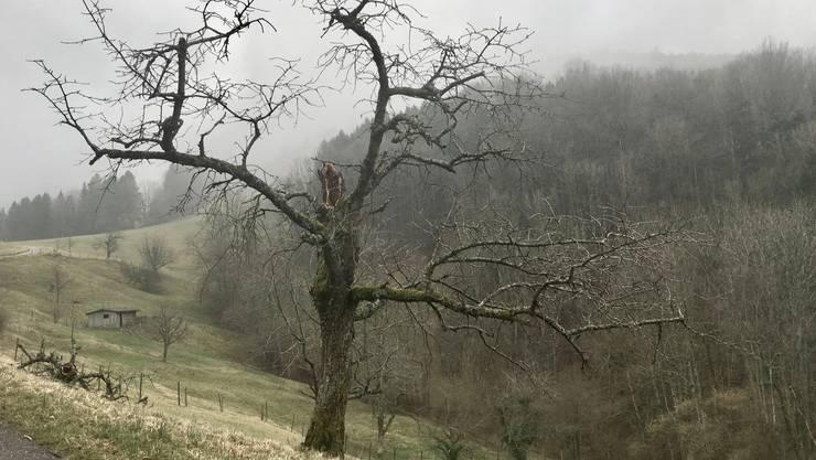 Im Januar viel Regen und wenig Schnee, tut Saaten, Wiesen und Bäumen weh.