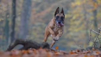Hunde gehören an die Leine, um das Wild zu schützen.