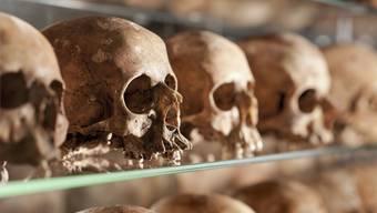 Mit dieser Ausstellung gewinnt das Naturhistorische Museum Basel den Prix Expo 2012