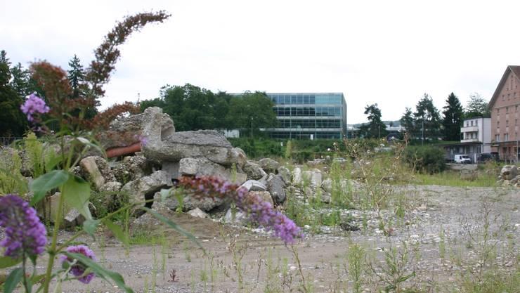 Campus-Baufelder: Ruhe und Idylle sind nur vordergründig.  (lp)