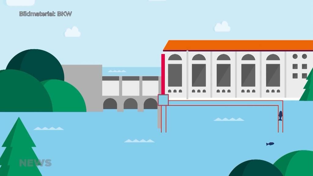 Bequem mit dem Lift durchs Wasserkaftwerk: Fische können nun bei Mühleberg das Hindernis überwinden