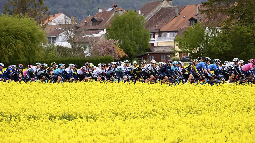 Das Feld unterwegs während der 2. Etappe der Tour de Romandie.