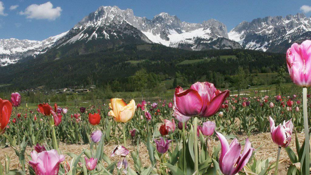 Touristen reisen diesen Sommer gerne nach Österreich, im Bild das Kaisergebirge im Tirol.
