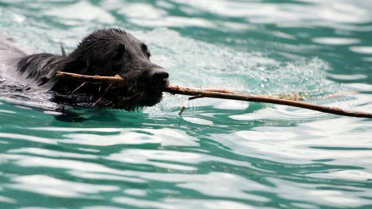 Der Hund hat bei der Rettungsaktion im Genfersee überlebt. Sein Herrchen, der ihn retten wollte, starb jedoch bei diesem Versuch. (Archivbild)