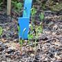 Jungpflanzen aus einem Langzeitversuch brachten Forschende auf die Spur der vererbten Erinnerung von Bäumen.