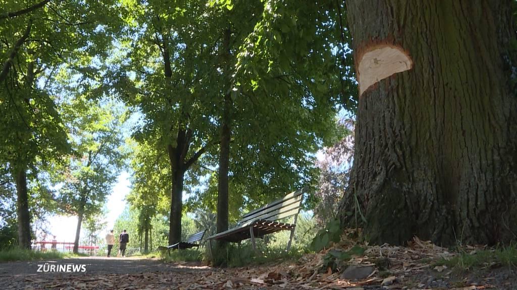 Vandalen toben sich an uralter Linde im Rieterpark aus