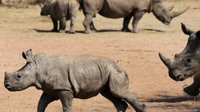Laut dem WWF sind Nashörner besonders bedroht (Symbolbild)
