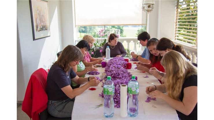 Die Narbenfäden der Blüten werden von fleissigen Mitarbeiterinnen in aufwendiger Handarbeit entfernt.