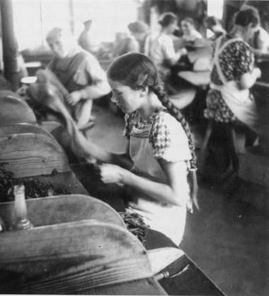 Aufnahme eines jungen Mädchens in einer Zigarrenfabrik aus dem Jahr 1937.