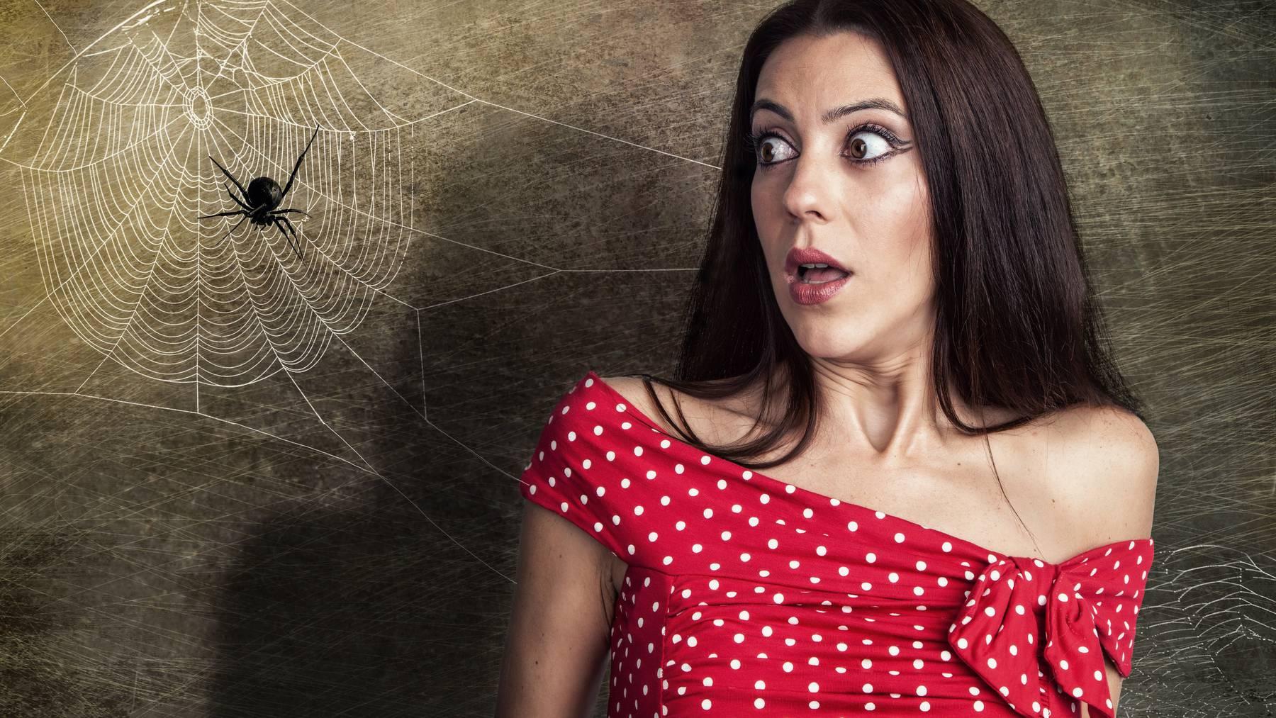 Arachnophobie, die panische Angst vor Spinnen, ist weit verbreitet