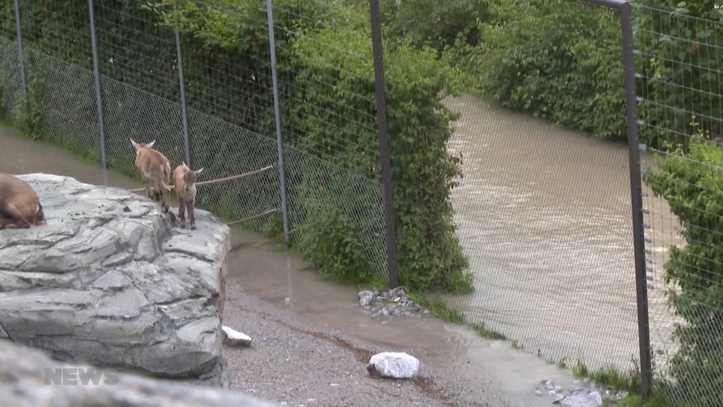 Tier-Evakuierung im Tierpark Dählhölzli wegen Hochwasser