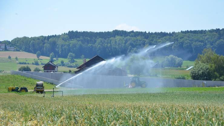 Bewässerung landwirtschaftlicher Kulturen mit Wasser aus der Bünz im Juli 2018: Später wurde die Entnahme aus dem kleinen Fluss verboten.