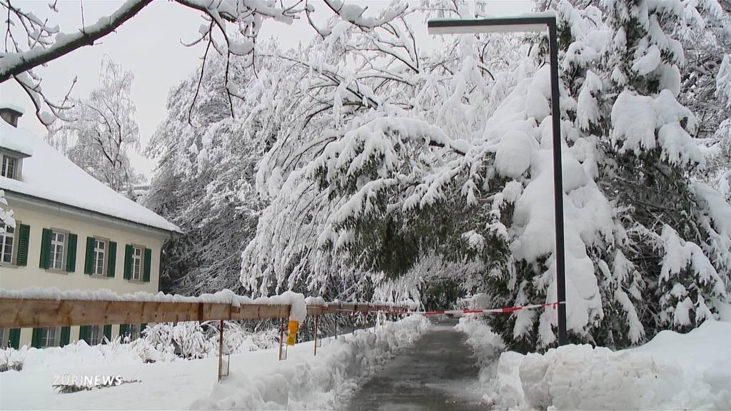Polizei warnt vor schneebedeckten Bäumen