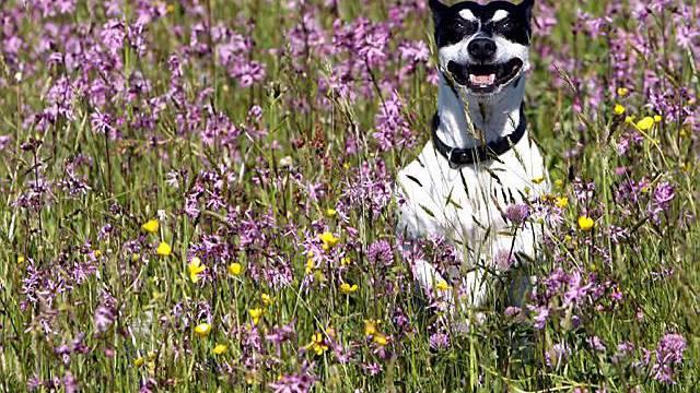 Auch Hund Nöldi in Sempach freut das schöne Wetter