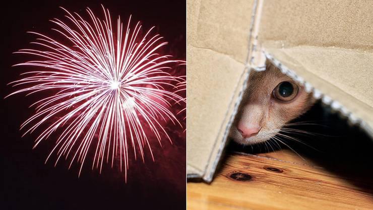 Tiere haben Angst vor Feuerwerk.