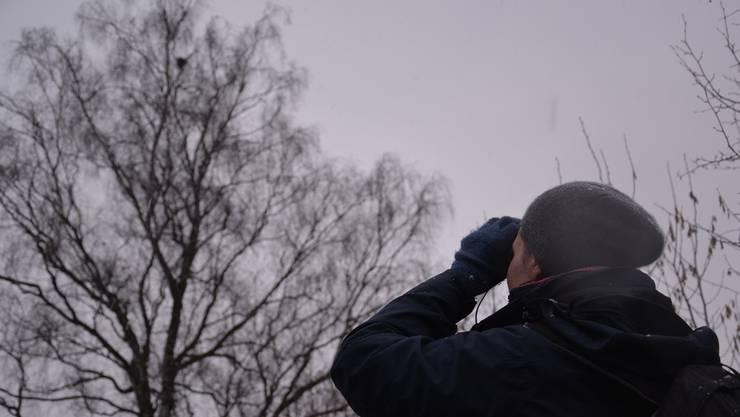 Stephanie Michler beobachtet im Schneeregen am Dienstagmorgen zwei Kernbeisser auf einer hohen Birke. kus