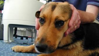 Hundebesitzer wollen ihr Tier vor Feuerwerk-Geknalle schützen.
