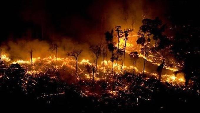 Das Inferno im Regenwald