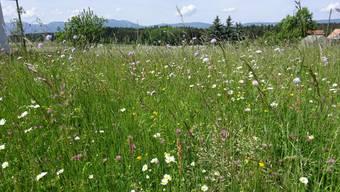 Die Grünen fordern: Biodiversität soll gefördert werden (Symbolbild)