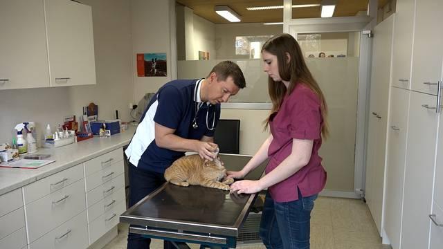 Auf Herz und Nieren geprüft: Tierarzt Daniel Vincenz und Assistentin Noelle Schürmann bereiten einen roten Kater auf die Kastration vor.