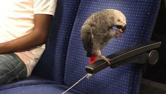 Die Passagiere der S16 staunten am Mittwochabend nicht schlecht: Unter die Pendler mischte sich auch ein Papagei.