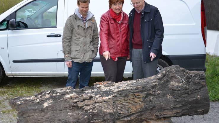 Christof Huber (ganz links), Astrid Romer und Stadtpräsident Toni Brühlmann-Jecklin betrachten die 10500 Jahre alte Schottereiche.