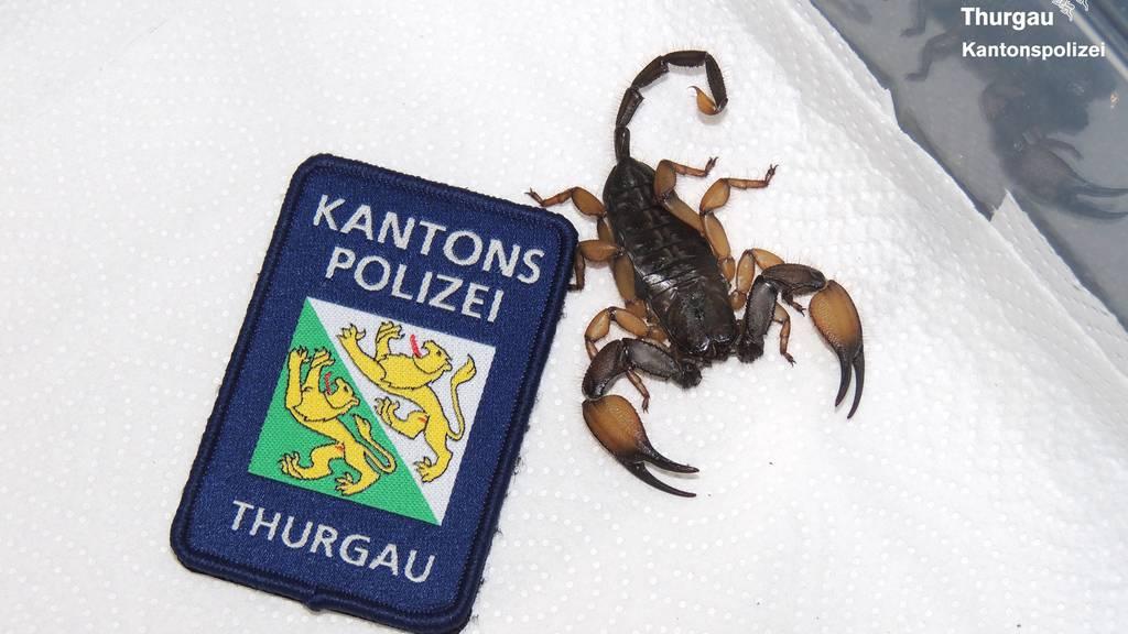 Unliebsames Souvenir: Polizist muss Skorpion einfangen