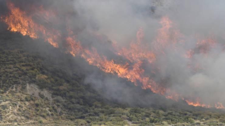 Feuerwehrleute kämpfen gegen ein sich schnell ausbreitendes Feuer bei Agua Dulce. Foto: Gene Blevins/ZUMA Wire/dpa