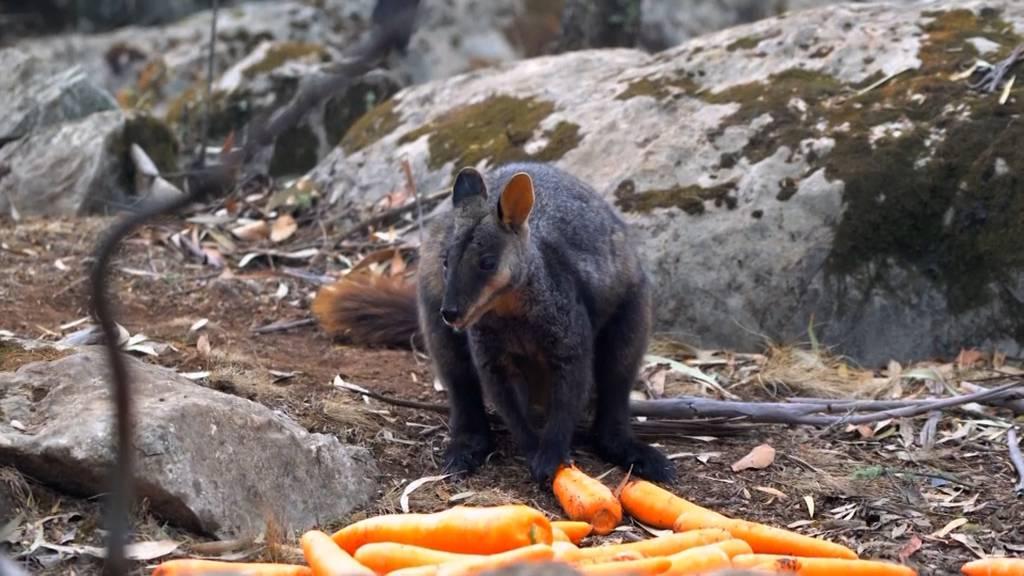 Karotten vom Himmel für die Tiere