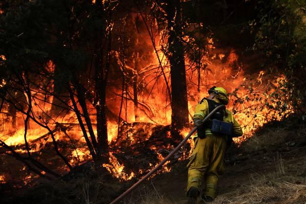 In Kalifornien versucht ein Feuerwehrmann Herr der Lage zu werden. Zehntausende verliessen letzte Woche ihre Häuser vor dem Feuer.