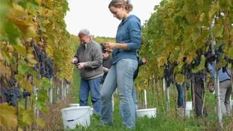 Mit dem neuen Kontrollsystem müssen die Weinproduzenten künftig eine Grundgebühr bezahlen. Walter Schwager