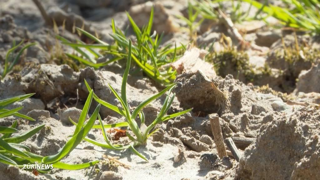 Schweizer Bauern sorgen sich wegen Trockenheit