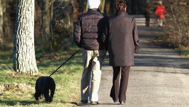 Ab 1. April bis 31. Juli müssen die Hunde im Wald und am Waldrand an der Leine geführt werden.
